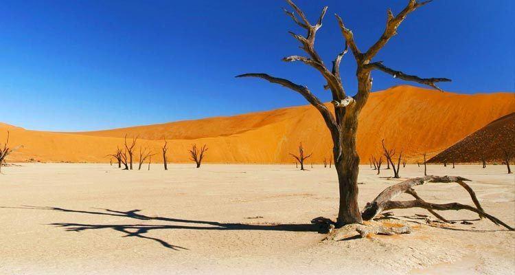 Dead vlei Africa