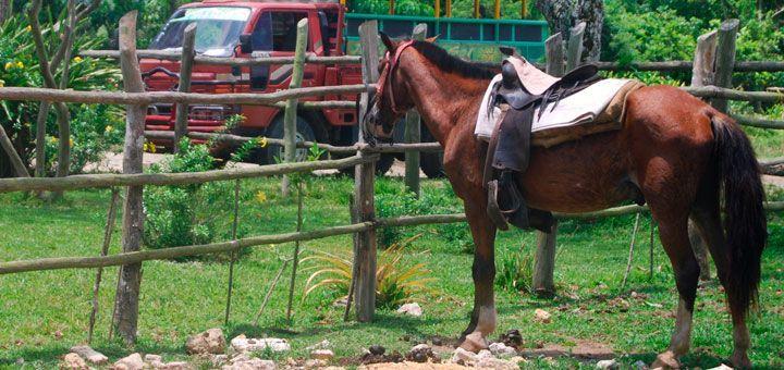 HorsePlay Tours Punta Cana