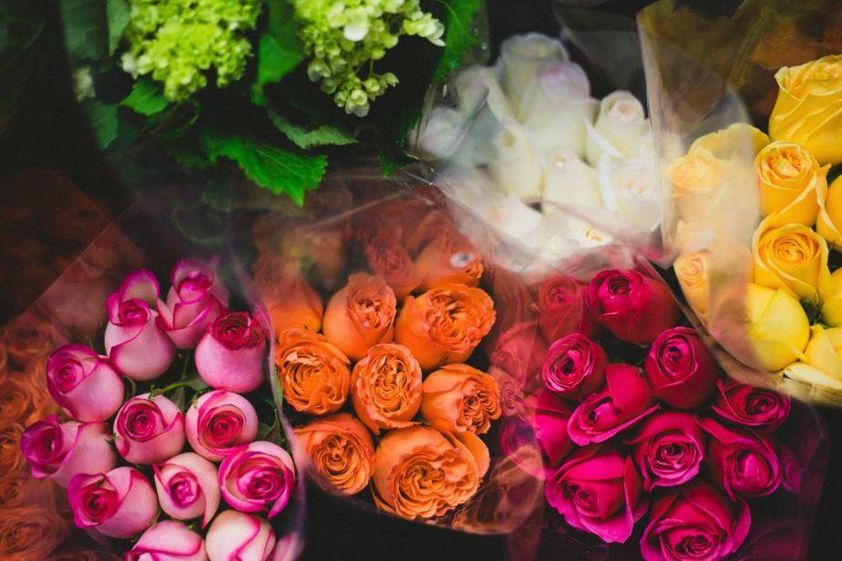 rosas para mama