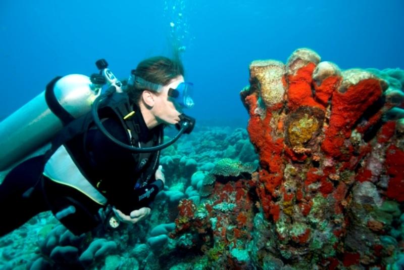 Bucear en Aruba