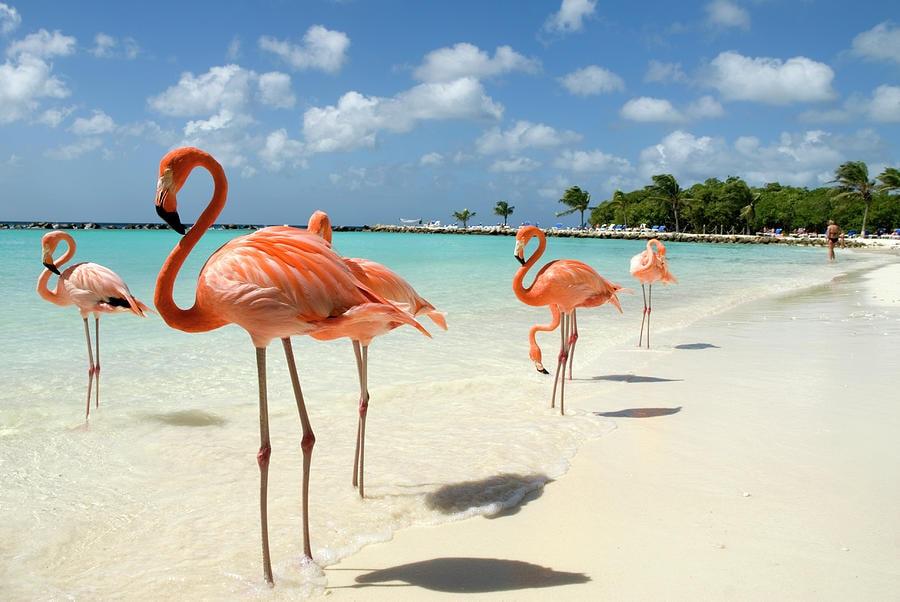 playa Flamingo