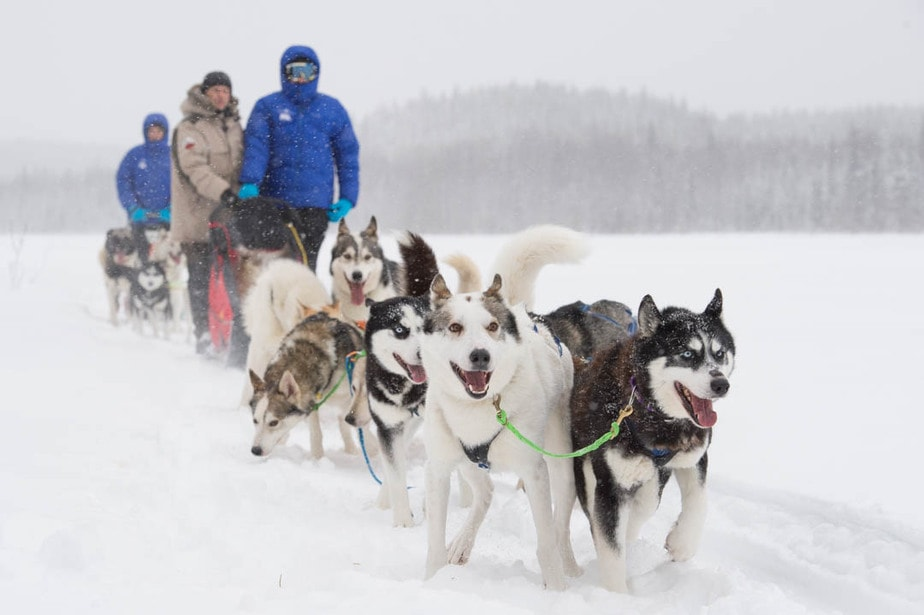 trineo tirado por perros huskies