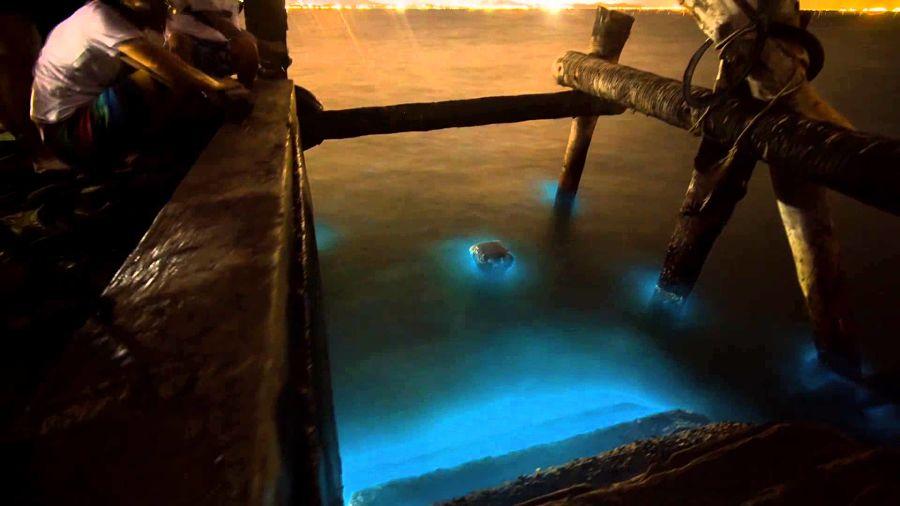 Plancton Luminiscente