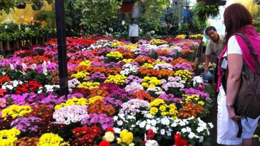 mercado de flores y plantas